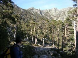 Otro pinar característico del Valle de la Fuenfría.