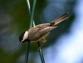 El turismo ornitológico puede verse potenciado con la llegada del Parque Nacional.