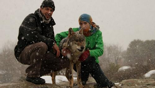 Miembros de Cañada Real junto con un lobo ibérico.
