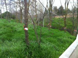 Árboles marcados para su posible corta. (Foto: Vecino de por Algete).