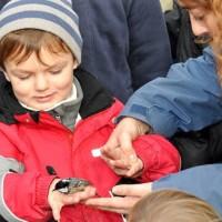 Navalafuente organiza un taller de anillamiento de aves