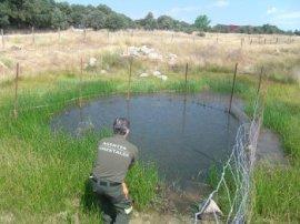 Liberación de las especies de anfibios salvadas por los agentes forestales.