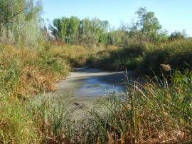 Dos meses después de la visita del Consejero de Medio Ambiente, el humedal está seco.