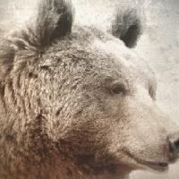 La leyenda del oso pardo del Guadarrama