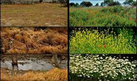 Algunos ejemplos del aspecto del entorno tras el uso de herbicidas y cuando no es utilizado.