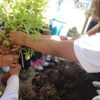 La Comunidad inaugura el primer 'Biomódulo' para investigar enfermedades agrícolas
