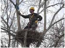 Agente forestal inspeccionando un nido.