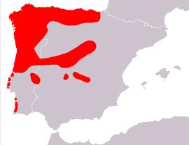 Distribución del lagarto verdinegro en la península Ibérica.