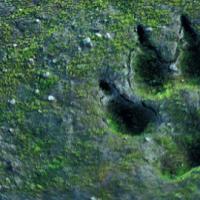 El 'hombre lobo' de Miraflores de la Sierra