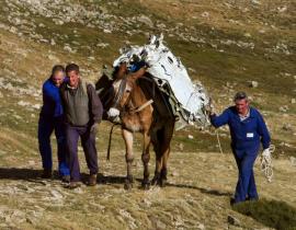 Operarios conduciendo a una mula cargada con los restos de una avioneta. (Foto: Comunidad de Madrid).