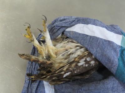 Una de las aves tratadas en Brinzal. (Foto: Brinzal).