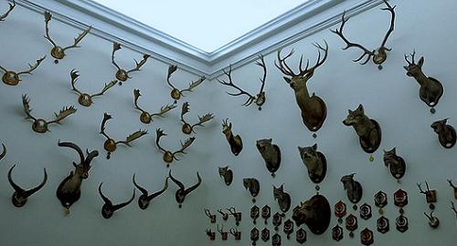 Sala de Trofeos del Museo de Caza. (Foto  Jose Javier Martin Espartosa)