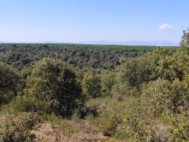 Parque Regional del río Guadarrama.