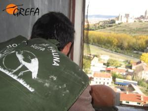 Miembro del Grefa instalando un nido artificial en el silo de Segovia. (Foto: Grefa).