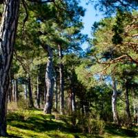 El bosque plateado de La Jarosa
