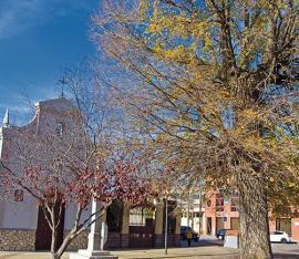 El olmo de la Ermita del Cristo, declarado Árbol Singular de la Comunidad de Madrid.