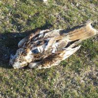 Solicitan al Gobierno medidas para proteger a los animales salvajes del envenenamiento por cebos