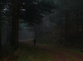 El bosque encantado. (Foto: Felipe colorado).