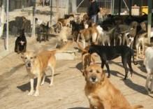 Perros en un centro de recogida.