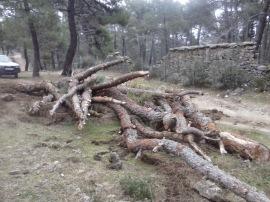 Pinos talados en el Monte Abantos. (Foto: Entorno Escorial).