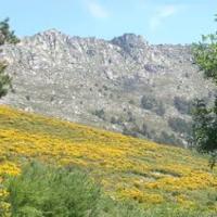 El destino Sierra de Guadarrama declara 'Capital del Cambroño en Flor' a Los Molinos