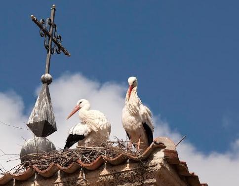 Pareja de cigüeñas en los tejados de la iglesia de San Eutropio. (Foto: colectivo Azálvaro).