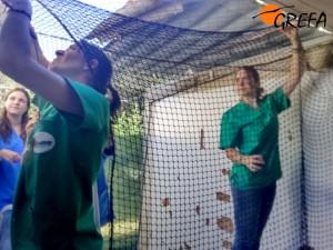 Voluntarios de GREFA colocando las redes. (Foto: GREFA).