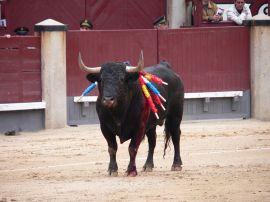 Corrida de toros. (Foto: Manuel González Olaechea y Franco).