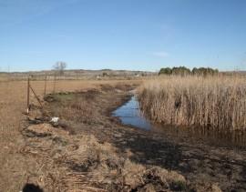 Zona quemada de carrizo en el humedal de San Galindo.