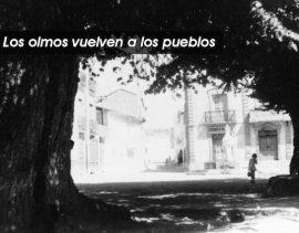Los olmos vuelven a los pueblos. Foto: Life+ Olmos Vivos.