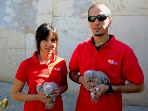 Miembros de GREFA con pollos de busardo ratonero rescatados. Foto: GREFA.
