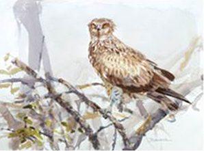 Ojos atentos (Águila culebrera), obra de Juan Varela.