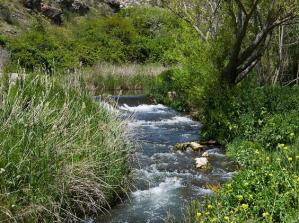Río Henares.