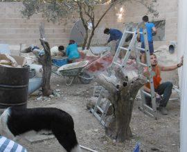Varios voluntarios internacionales habilitan un recinto para albergar fauna silvestre irrecuperable en el centro de GREFA. Foto: GREFA.