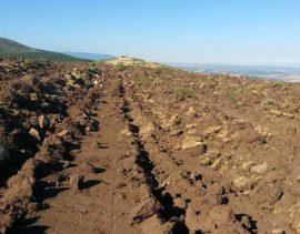 Aspecto de la finca arada dentro del Parque Natural. Foto: Ecologistas en Acción Segovia.