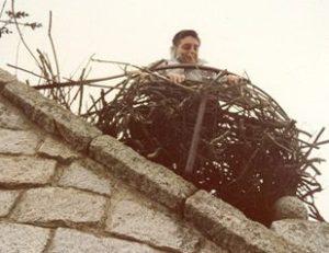 Uno de los controles efectuados sobre la población de cigüeñas en Hoyo de Manzanares.
