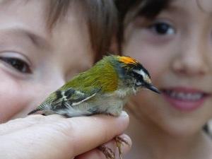 La educación ambiental en la escuela pasa a ser prioridad en conservación. Foto: SEO/Birdlife.