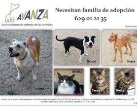 Algunos de los animales de compañía que se pueden adoptar en Avanza Torrelodones.