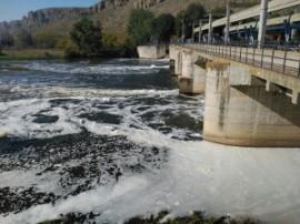 Aspecto del río Jarama a su paso por la presa del Rey. (Foto: Ecologistas en Acción).