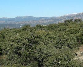 Zona forestal de Torrelodones. (Ayto. Torrelodones).
