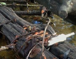 Las aguas del arroyo de Trofa astrata todo tipo de residuos.