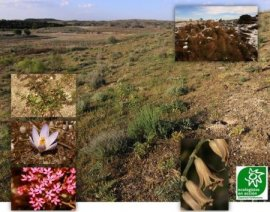 Plantas que podemos encontrar en los cerros próximos a la ermita de Valdemoro. Foto: Ecologistas en Acción.