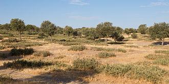 Dehesa Boyal de San Sebastián de los Reyes, paraje natural por el que cruzaría el proyecto de la nueva radial.