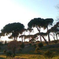 Actividades ambientales para disfrutar de Madrid en verano