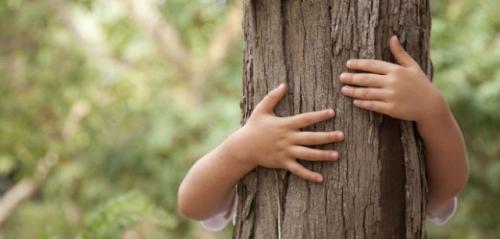 La ONG ambiental defiende la inclusión de una asignatura específica sobre educación ambiental en el currículo escolar.