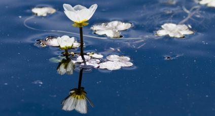 Flora acuática que puede observarse en la zona 'Arcilleros Norte'. Foto: 'Arcelleros Norte'. Foto: Javier Sánchez.