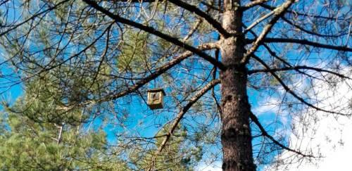 Caja nido instalada en Monterrubio. Foto: Ayto Moralzarzal.