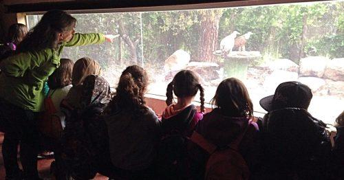 """Observación de buitres en el centro """"Naturaleza Viva"""" de GREFA. Foto: GREFA."""