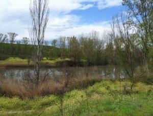 La solución planteada por los ecolosgistas es la creación del Corredor Ecológico que una la Casa de Campo con el Parque Regional del Curso Medio del Río Guadarrama.