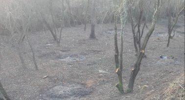 Zona afectada por las operaciones de TRAGSA, dejando las riberas desprovista de la cobertura vegetal necesaria para la fauna autóctona.